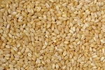 Shelled Wheat Minos imported 1lb